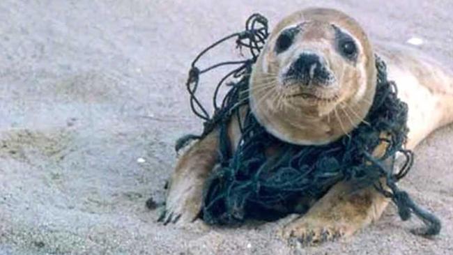 plast i havet konsekvenser